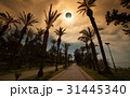 Total solar eclipse, palm avenue in resort city 31445340