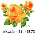 roses17611pix7 31446373