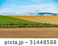 北海道 畑 田園の写真 31448588