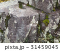 日本 パーク 公園の写真 31459045