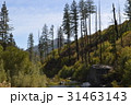 カリフォルニアの風景 31463143