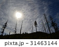 山火事の後のカリフォルニアの森と雲 31463144