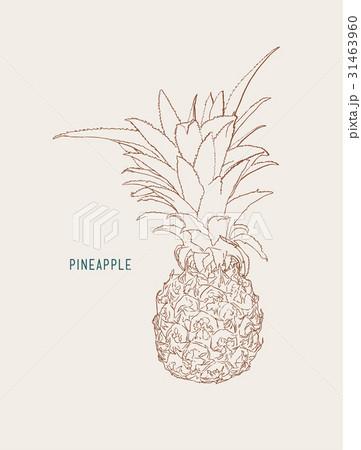 pine apple ,tropical fruit sketch vector.のイラスト素材 [31463960] - PIXTA