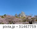 兵庫 姫路城 桜の写真 31467759