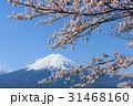 富士山 富士 染井吉野の写真 31468160