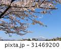 岩手山 桜 花の写真 31469200