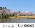 岩手山 公園 桜の写真 31469203