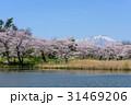 高松公園 岩手山 桜の写真 31469206