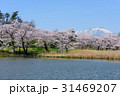 高松公園 岩手山 桜の写真 31469207