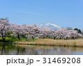 岩手山 公園 桜の写真 31469208