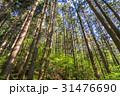 木 森 林の写真 31476690