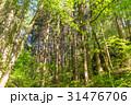 木 森 林の写真 31476706