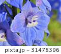 Splendid blue delphinium 31478396