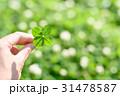 鮮やかな草原で見つけた幸運の四つ葉のクローバー 31478587