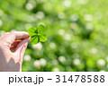 鮮やかな草原で見つけた幸運の四つ葉のクローバー 31478588