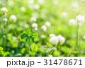 草むらにある幸運の四つ葉のクローバー 31478671