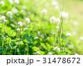 草むらにある幸運の四つ葉のクローバー 31478672