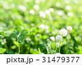 綺麗なシロツメクサの草むらにある幸運の四つ葉のクローバー 31479377