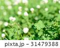 綺麗なシロツメクサの草むらにある幸運の四つ葉のクローバー 俯瞰 31479388