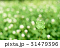 シロツメクサの草むらにある幸運の四つ葉のクローバー 玉ボケ背景 31479396
