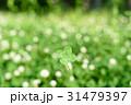 シロツメクサの草むらにある幸運の四つ葉のクローバー 玉ボケ背景 31479397