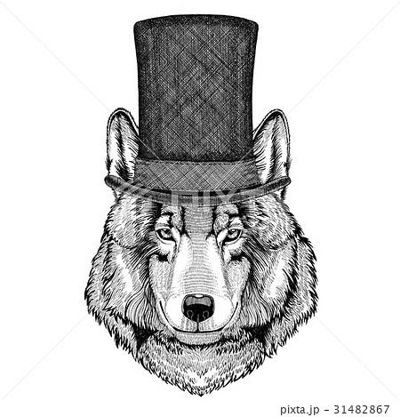 Wolf Dog wearing cylinder top hat 31482867