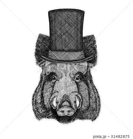 Aper, boar, hog, hog, wild boar wearing cylinder 31482875