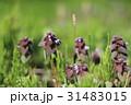 花 野草 野花の写真 31483015