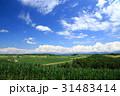 自然 風景 美瑛の写真 31483414