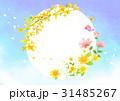 イラスト チョウ 蝶のイラスト 31485267