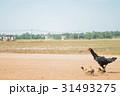 鳥の親子① 31493275