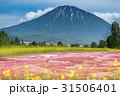 倶知安の芝桜 31506401