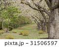 戸田記念墓地公園 31506597