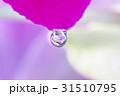 花雫 31510795