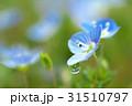 花雫 31510797