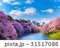 桜 千鳥ヶ淵 春の写真 31517086