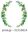 野葡萄 蔦 装飾のイラスト 31518814