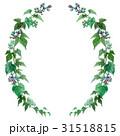 野葡萄 蔦 装飾のイラスト 31518815