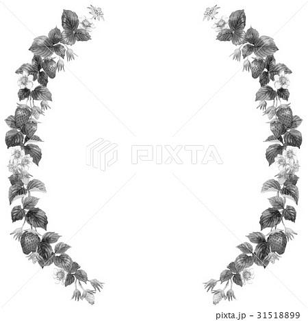 いちごの半円形装飾フレームモノクロのイラスト素材 31518899 Pixta