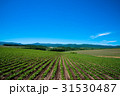 北海道 美瑛 晴れの写真 31530487