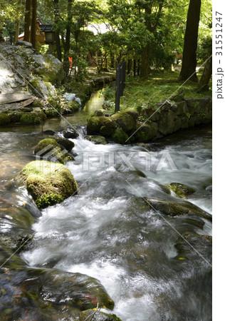上賀茂神社 御手洗川の写真素材 ...