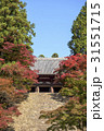 秋の京都・紅葉の神護寺 31551715