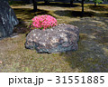 庭石 庭園 花の写真 31551885
