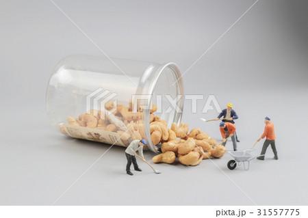 group of Mini farmers preparing nuts 31557775