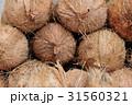 ヤシの実 椰子の実 ココナッツの写真 31560321
