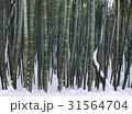 冬 木 竹の写真 31564704