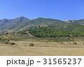 木 山 トルコのの写真 31565237