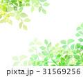 木漏れ日 テクスチャー 背景素材 31569256