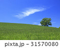 美瑛 北海道 美瑛の丘の写真 31570080