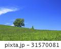 美瑛 北海道 美瑛の丘の写真 31570081